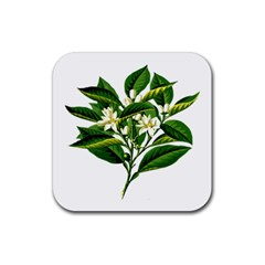 Bitter Branch Citrus Edible Floral Rubber Coaster (square)  by Nexatart