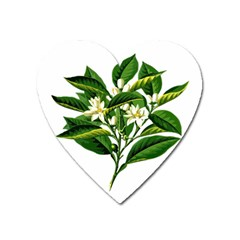 Bitter Branch Citrus Edible Floral Heart Magnet by Nexatart