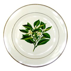 Bitter Branch Citrus Edible Floral Porcelain Plates by Nexatart