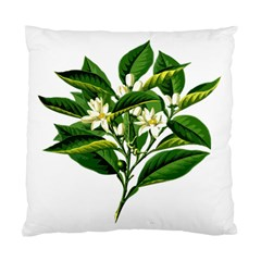 Bitter Branch Citrus Edible Floral Standard Cushion Case (two Sides) by Nexatart