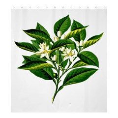Bitter Branch Citrus Edible Floral Shower Curtain 66  X 72  (large)  by Nexatart
