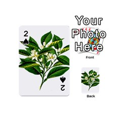 Bitter Branch Citrus Edible Floral Playing Cards 54 (mini)