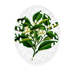 Bitter Branch Citrus Edible Floral Ornament (oval Filigree) by Nexatart