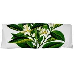 Bitter Branch Citrus Edible Floral Body Pillow Case Dakimakura (two Sides) by Nexatart