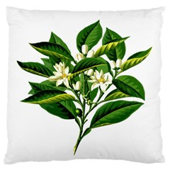 Bitter Branch Citrus Edible Floral Standard Flano Cushion Case (two Sides)