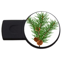 Branch Floral Green Nature Pine Usb Flash Drive Round (2 Gb) by Nexatart