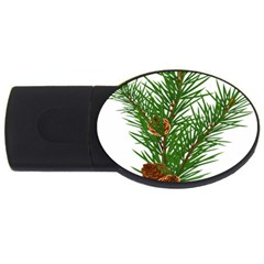 Branch Floral Green Nature Pine Usb Flash Drive Oval (4 Gb) by Nexatart