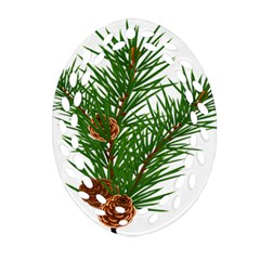 Branch Floral Green Nature Pine Ornament (oval Filigree) by Nexatart