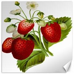 Food Fruit Leaf Leafy Leaves Canvas 12  X 12   by Nexatart