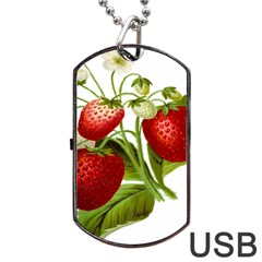 Food Fruit Leaf Leafy Leaves Dog Tag Usb Flash (two Sides) by Nexatart