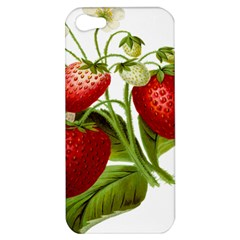 Food Fruit Leaf Leafy Leaves Apple Iphone 5 Hardshell Case by Nexatart