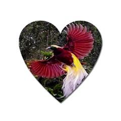 Cendrawasih Beautiful Bird Of Paradise Heart Magnet