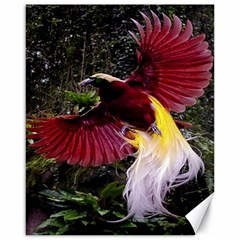 Cendrawasih Beautiful Bird Of Paradise Canvas 16  X 20