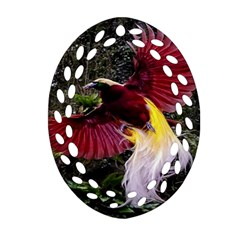 Cendrawasih Beautiful Bird Of Paradise Oval Filigree Ornament (two Sides)