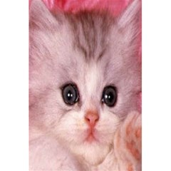 Cat  Animal  Kitten  Pet 5 5  X 8 5  Notebooks