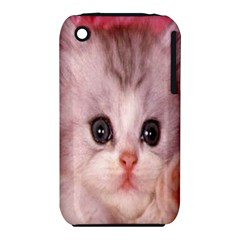 Cat  Animal  Kitten  Pet Iphone 3s/3gs