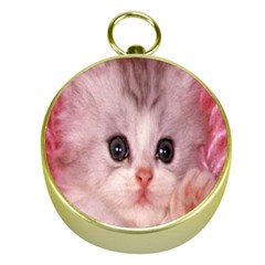 Cat  Animal  Kitten  Pet Gold Compasses