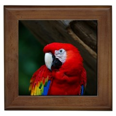 Scarlet Macaw Bird Framed Tiles by BangZart