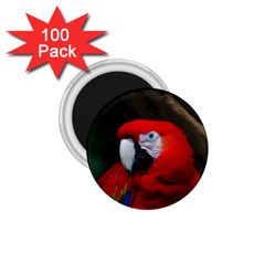 Scarlet Macaw Bird 1 75  Magnets (100 Pack)  by BangZart
