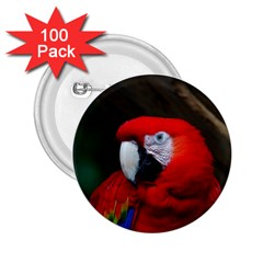 Scarlet Macaw Bird 2 25  Buttons (100 Pack)