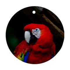 Scarlet Macaw Bird Round Ornament (two Sides)