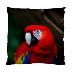Scarlet Macaw Bird Standard Cushion Case (two Sides) by BangZart
