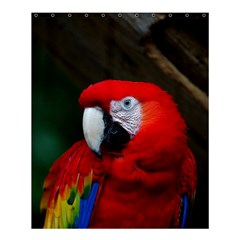 Scarlet Macaw Bird Shower Curtain 60  X 72  (medium)