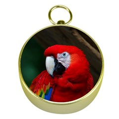 Scarlet Macaw Bird Gold Compasses by BangZart