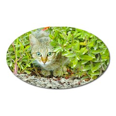 Hidden Domestic Cat With Alert Expression Oval Magnet by dflcprints