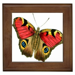 Butterfly Bright Vintage Drawing Framed Tiles