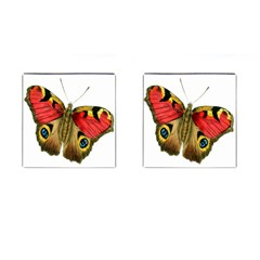 Butterfly Bright Vintage Drawing Cufflinks (square) by Nexatart