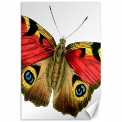 Butterfly Bright Vintage Drawing Canvas 20  X 30   by Nexatart