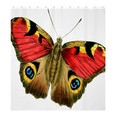 Butterfly Bright Vintage Drawing Shower Curtain 66  X 72  (large)  by Nexatart