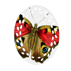 Butterfly Bright Vintage Drawing Ornament (oval Filigree)