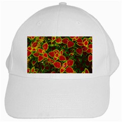 Flower Red Nature Garden Natural White Cap
