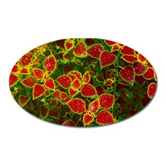 Flower Red Nature Garden Natural Oval Magnet