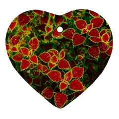 Flower Red Nature Garden Natural Heart Ornament (two Sides) by Nexatart