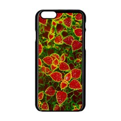 Flower Red Nature Garden Natural Apple Iphone 6/6s Black Enamel Case by Nexatart
