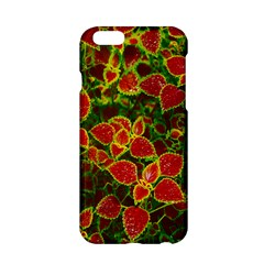 Flower Red Nature Garden Natural Apple Iphone 6/6s Hardshell Case by Nexatart