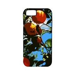 Orange Tree Apple Iphone 5 Classic Hardshell Case (pc+silicone) by Valentinaart