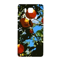 Orange Tree Samsung Galaxy Alpha Hardshell Back Case by Valentinaart