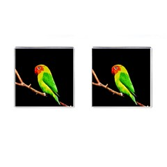 Parrot  Cufflinks (square) by Valentinaart