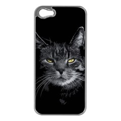 Domestic Cat Apple Iphone 5 Case (silver) by Valentinaart