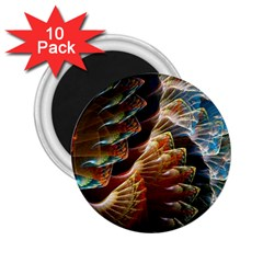 Fractal Patterns Abstract 3840x2400 2 25  Magnets (10 Pack)