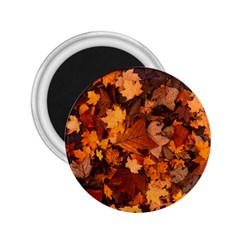 Fall Foliage Autumn Leaves October 2 25  Magnets by Nexatart