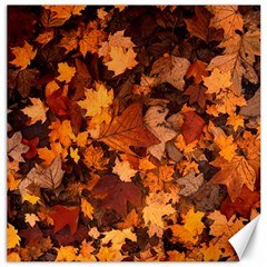 Fall Foliage Autumn Leaves October Canvas 20  X 20   by Nexatart