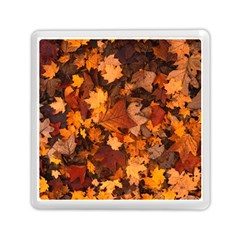 Fall Foliage Autumn Leaves October Memory Card Reader (square)  by Nexatart