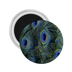 Peacock Feathers Blue Bird Nature 2 25  Magnets by Nexatart