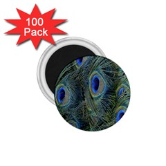 Peacock Feathers Blue Bird Nature 1 75  Magnets (100 Pack)