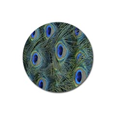Peacock Feathers Blue Bird Nature Magnet 3  (round) by Nexatart